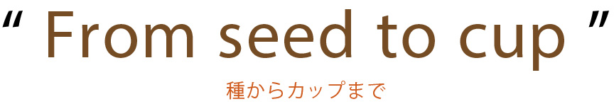 From seed to cup/種からカップまで